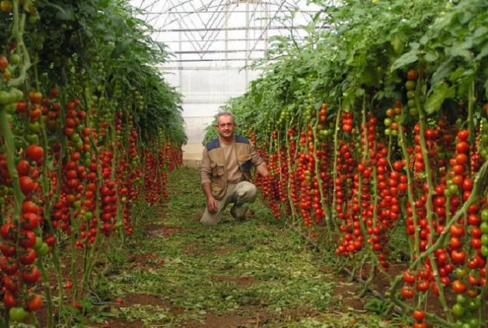 د زراعتی تولیداتو د پرمختګ لاری چاری
